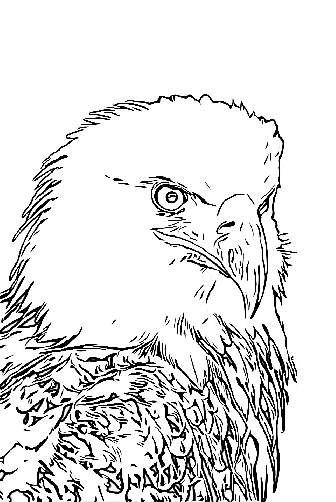 Eagle king of the skies coloring page