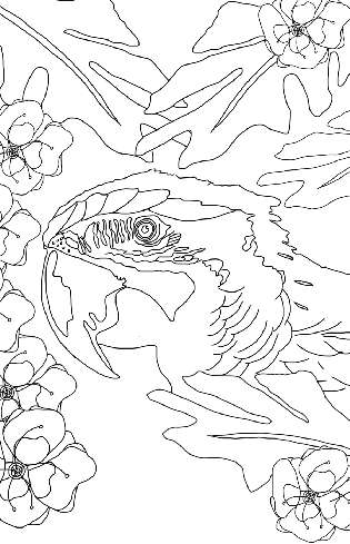 Macaw Parrot Coloring Printable