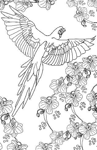 Parrot in Flight Coloring Page
